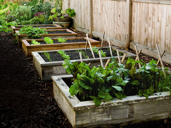 Pdf diy raised garden bed plans easy download rocking for Diy vegetable garden